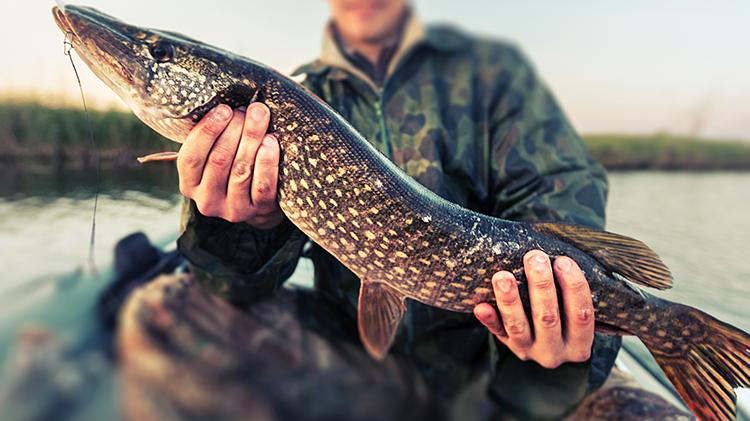 Dall River Pike Fishing Trip