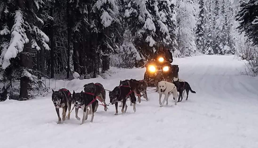 Pounding Paws Kennel Tour with Mushing