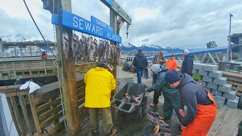B.O.S.S. Seward Halibut Fishing Trip